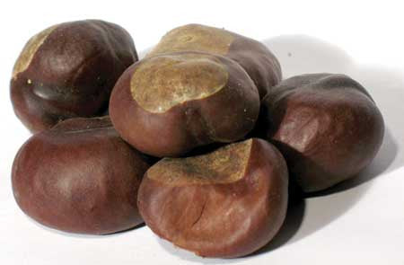 1 Lb Buckeyes Whole (Aesculus)