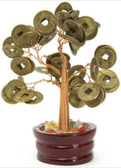 Money Tree 4""