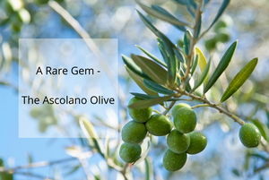 The Making of a World-Class EVOO with the Rare Ascolano Olives