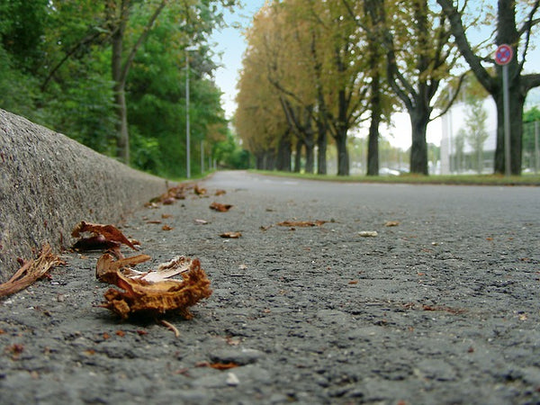 Image of an empty road with autum leaves in the gutter
