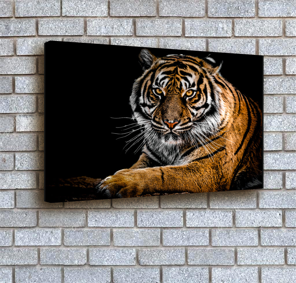 Tiger at Night canvas