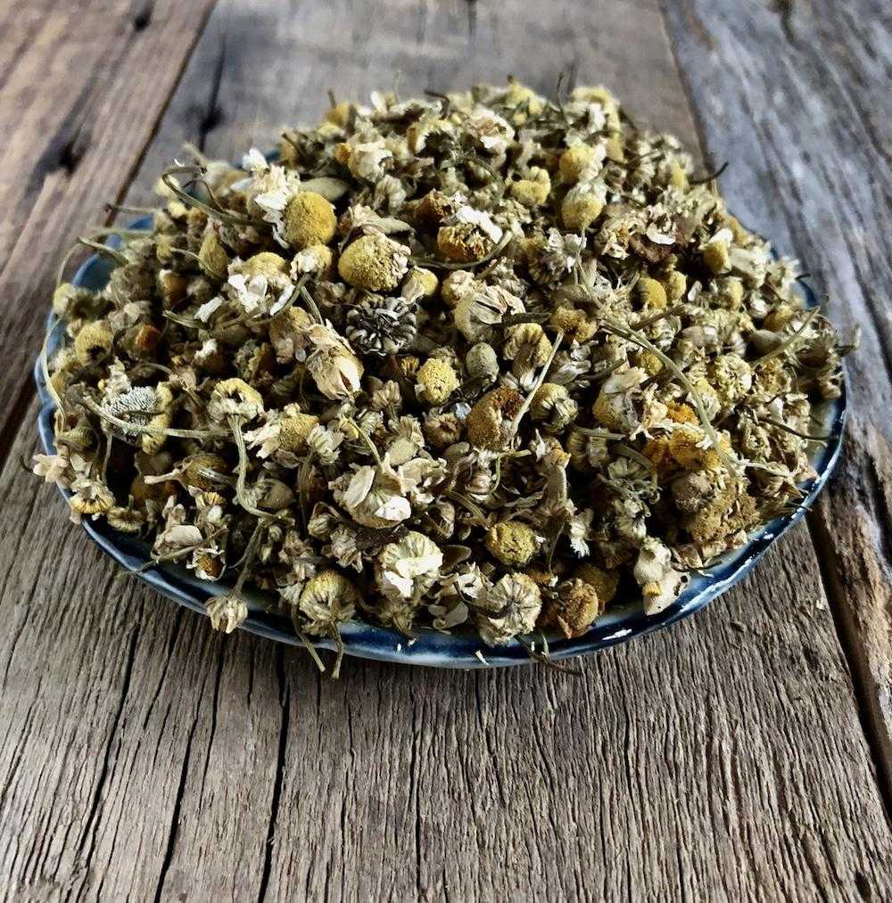 Natural Dyes - Dyers' Chamomile