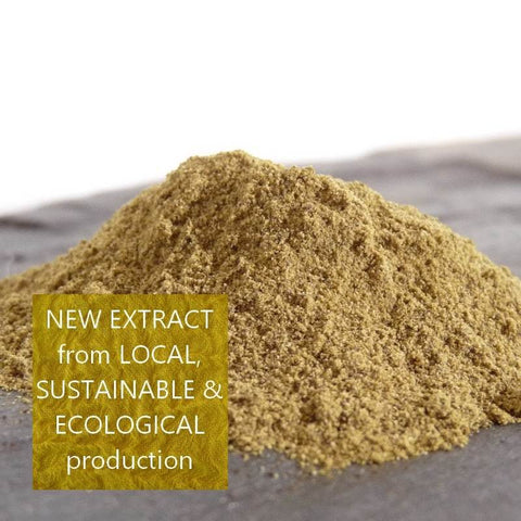 Natural Dyes - Weld Extract from Occitania