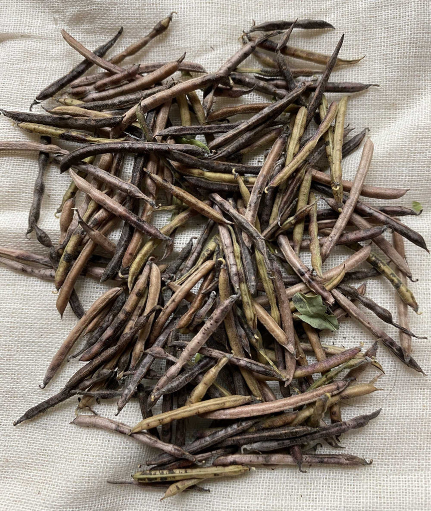 Natural Dyes - Indigofera Suffruticosa Seeds | The Yarn Tree - fiber, yarn and natural dyes