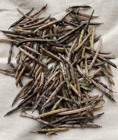 Natural Dyes - Indigofera Suffruticosa Seeds