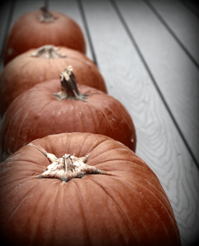 """Four Pumpkins in a Row"", Photographed By:  Jennie Louwes"