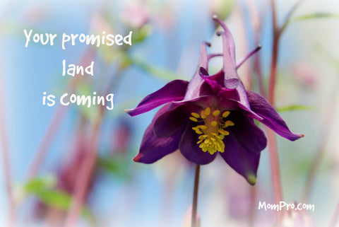 The Land of Promise | Word-Overlay by Jennie Louwes