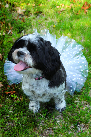 "Wedding day dotty white 6"" dog or pet tutu"