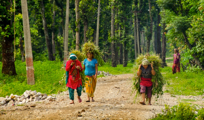 Three Nepali ladies wearing flip-flops while hauling grass
