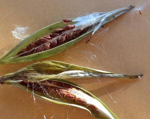 Narrow Leaf Milkweed Seeds