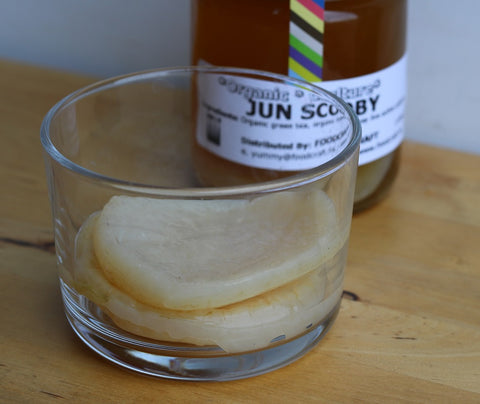 Jun tea SCOBY