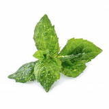Veritable Essential Aromatic Herbs - Spearmint Lingot® - FoodCraft Online Store