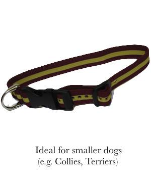 Royal Regiment of Fusiliers Dog Collar