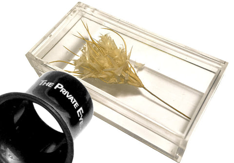"The Private Eye Clear Acrylic - Box ""C"" with specimen and loupe"