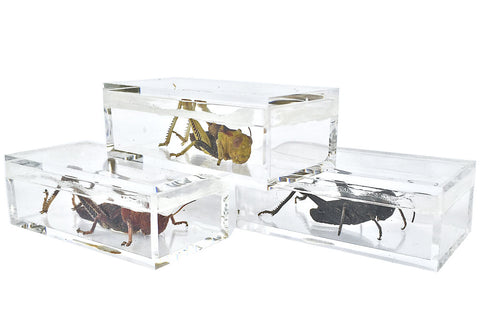 "The Private Eye Clear Acrylic - Box ""C"" with specimen"