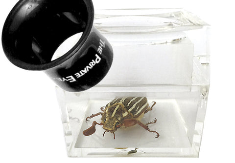 "The Private Eye Acrylic Magnifier - Box ""B"" with specimen"