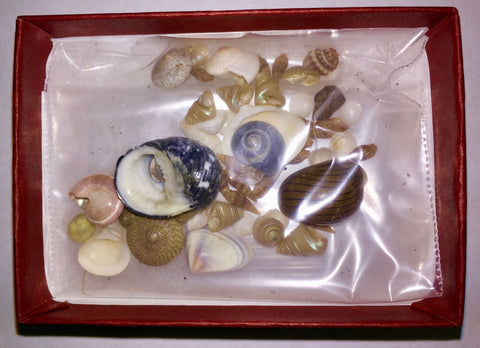 Miniature Shell Collection-FREE GIFT