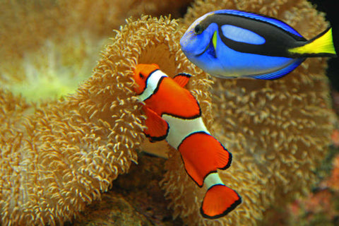 Finding Dory, Saving Nemo - Devocean Co.