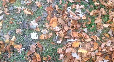 Fallen leaves at Sage Garden