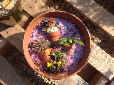 Nora's succulent planter project