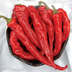 Organic Hot Portugal Pepper