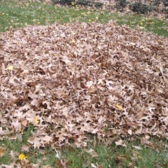 Loose leaves for mulching