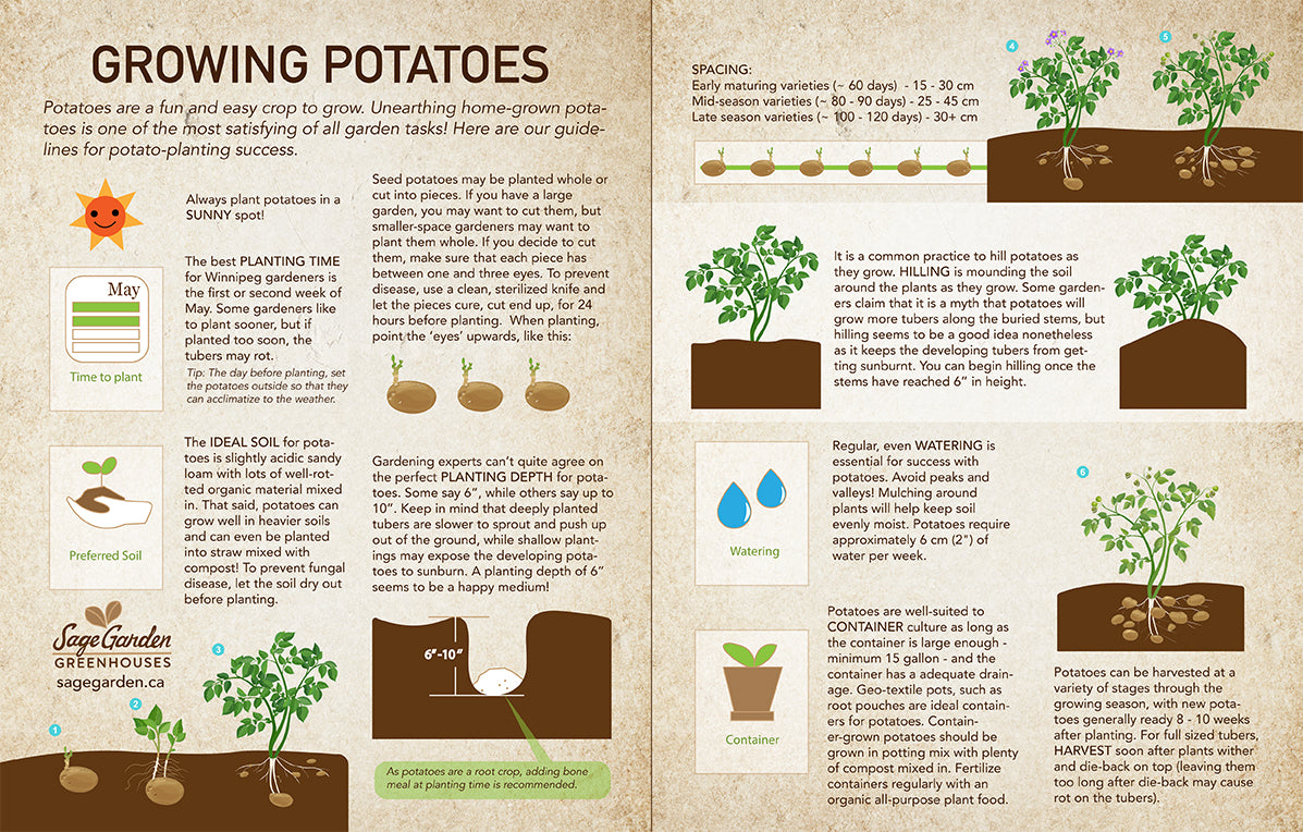 how to plant potatoes by Sage Garden