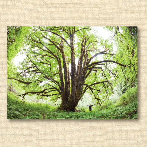 Card - Ancient Forest Alliance Big Leaf Maple