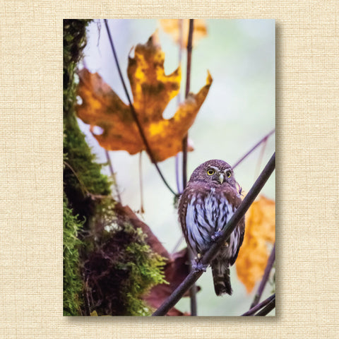 Card - Ancient Forest Alliance Pygmy Owl