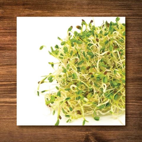 Alfalfa Sprouting Seeds - Certified Organic
