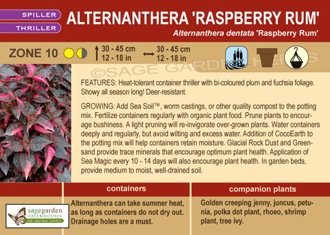 Alternanthera 'Raspberry Rum' (Live Plant)
