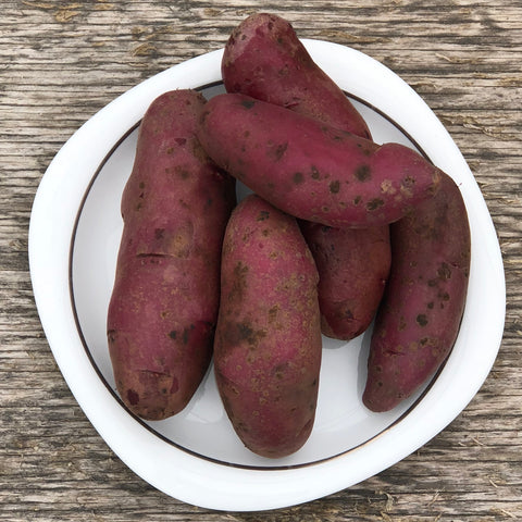 Seed Potato - Amarosa Fingerling (Certified Organic) (SPOG)