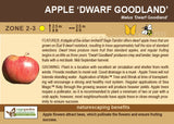 Apple 'Dwarf Goodland' (Live Plant)