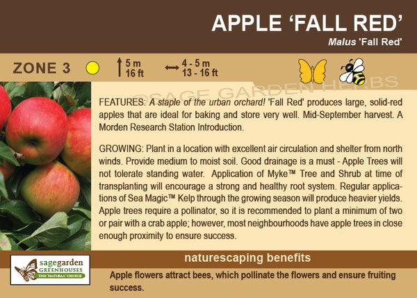 Apple 'Fall Red' (Live Plant)