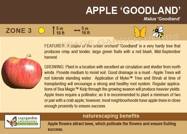 Apple 'Goodland' (Live Plant)