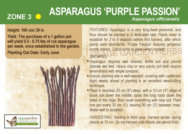 Asparagus 'Purple Passion' (Live Plant)