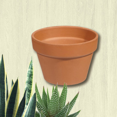 Terracotta Clay Pot - Azalea