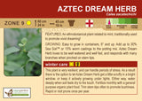 Aztec Dream Herb (Live Plant)