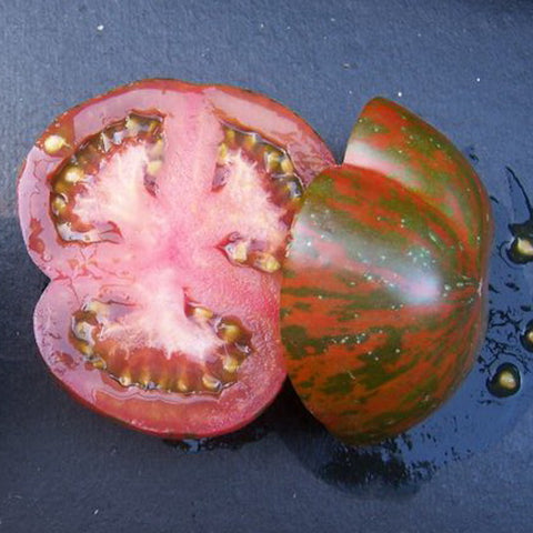 Live Plant - Tomato, Black & Brown Boar