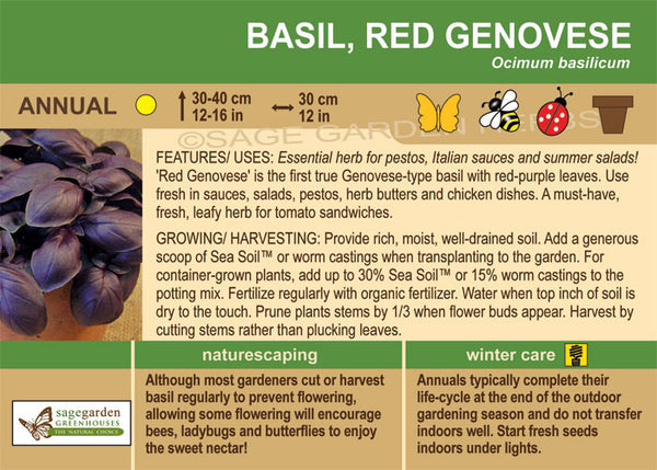 Basil 'Red Genovese' (Live Plant)
