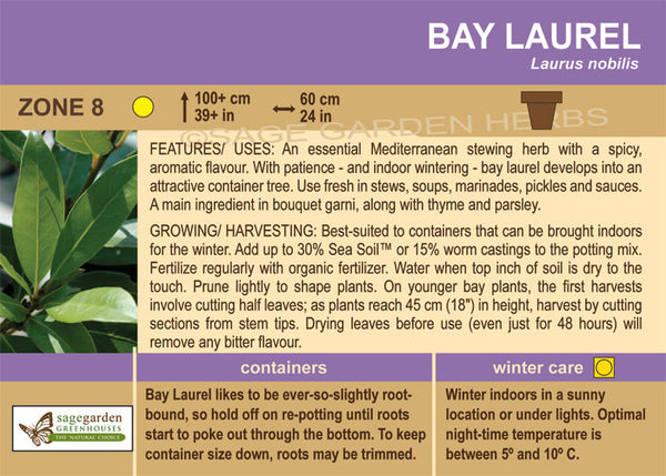 Bay Laurel (Live Plant)