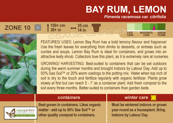Bay Rum 'Lemon' (Live Plant)