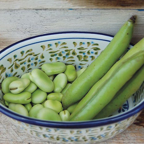Bean, Fava Windsor Organic Seeds