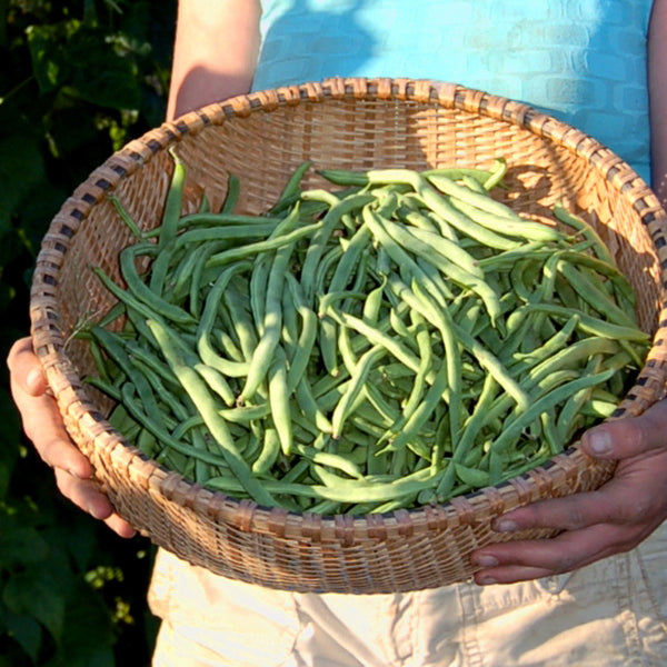 Organic Kentucky Wonder Bean