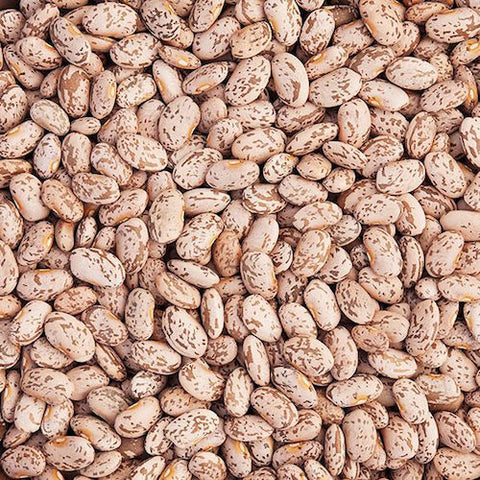 Bean, Pinto Quincy Organic Seeds