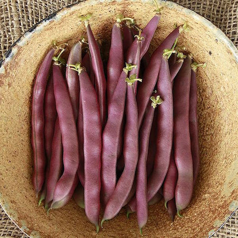 Bean, Red Swan Bush Organic Seeds