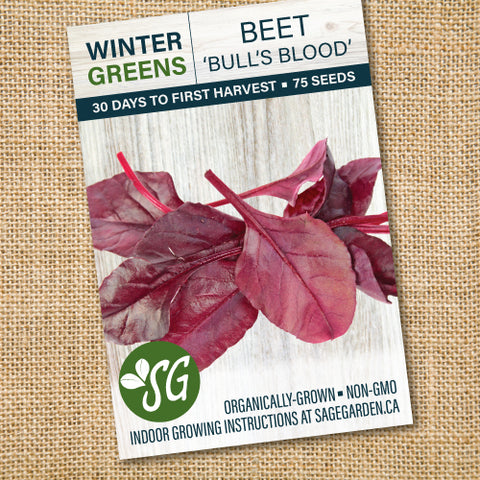 Organic Beet, Bull's Blood - 75 seeds