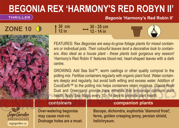 Begonia Rex 'Harmony's Red Robyn II' (Live Plant)