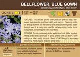 Bellflower, Blue Gown (Live Plant)