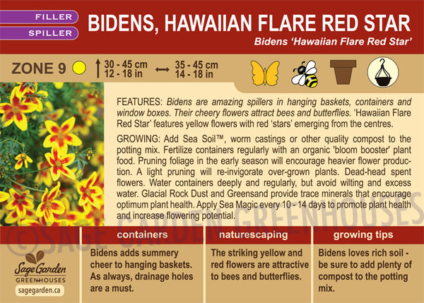 Bidens, Hawaiian Flare Red Star (Live Plant)